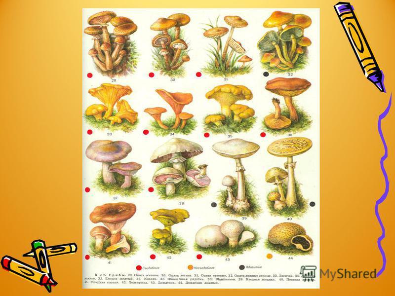 Какие грибы они положат себе в