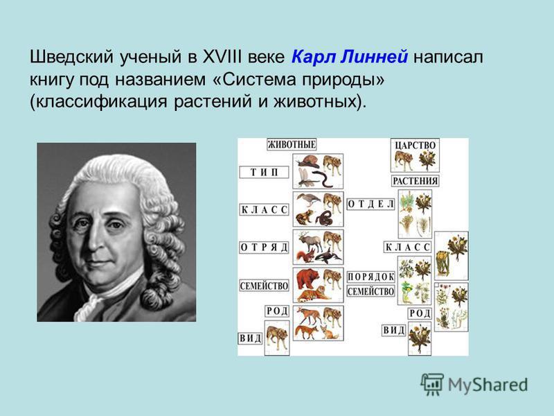Шведский ученый в XVIII веке Карл Линней написал книгу под названием «Система природы» (классификация растений и животных).