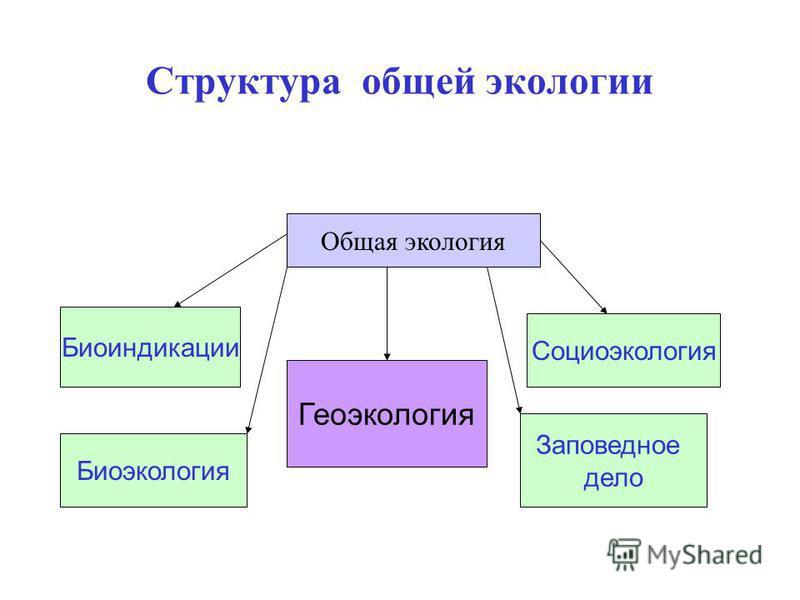 Структура общей экологии Общая экология Биоиндикации Биоэкология Социоэкология Заповедное дело Геоэкология