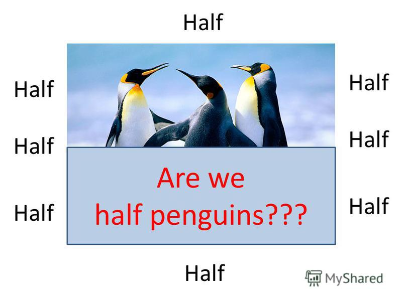 Half Are we half penguins???