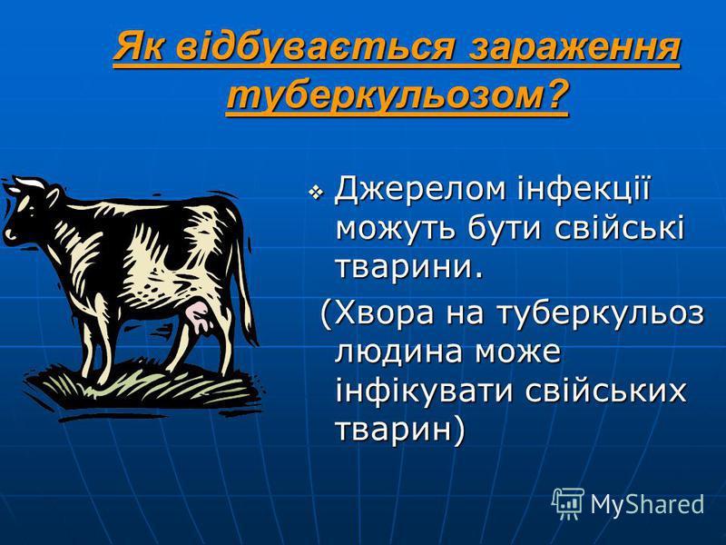 Як відбувається зараження туберкульозом? Джерелом інфекції можуть бути свійські тварини. Джерелом інфекції можуть бути свійські тварини. (Хвора на туберкульоз людина може інфікувати свійських тварин) (Хвора на туберкульоз людина може інфікувати свійс
