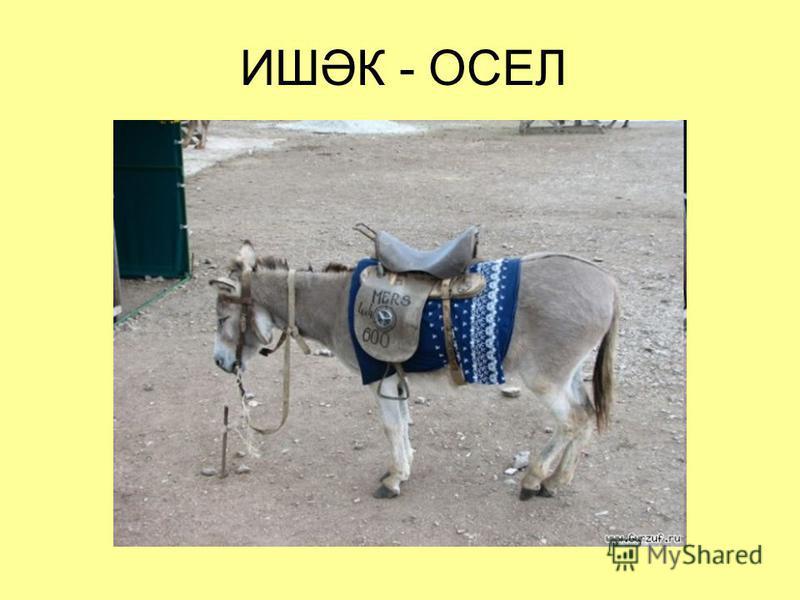 ИШӘК - ОСЕЛ