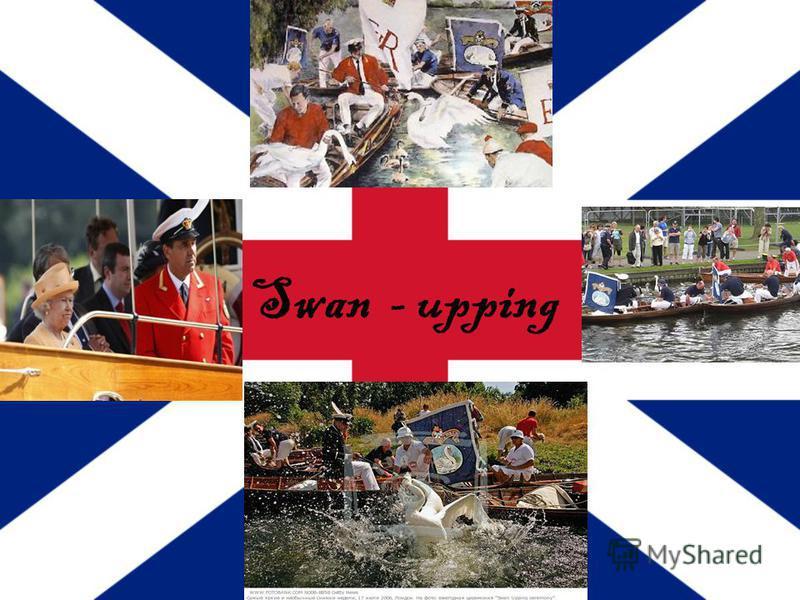 Swan - upping