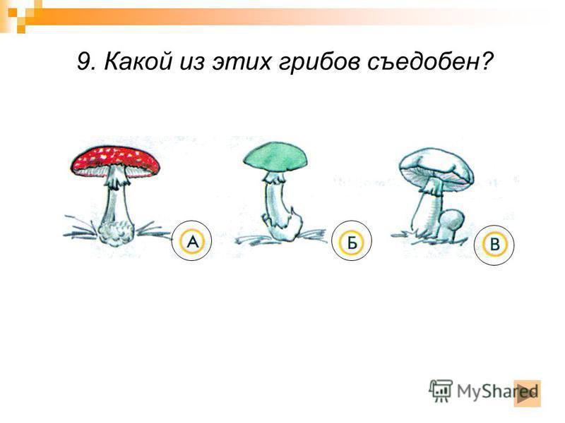 9. Какой из этих грибов съедобен?