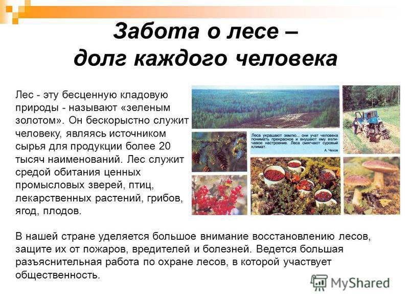 Забота о лесе – долг каждого человека Лес - эту бесценную кладовую природы - называют «зеленым золотом». Он бескорыстно служит человеку, являясь источником сырья для продукции более 20 тысяч наименований. Лес служит средой обитания ценных промысловых