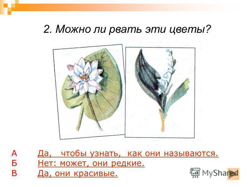 2. Можно ли рвать эти цветы? А Да, чтобы узнать, как они называются.Да, чтобы узнать, как они называются. Б Нет: может, они редкие.Нет: может, они редкие. В Да, они красивые.Да, они красивые.
