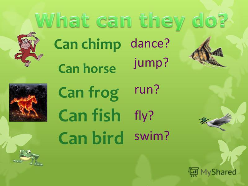 Can chimp Can horse Can frog dance? jump? run? fly? swim? Can fish Can bird