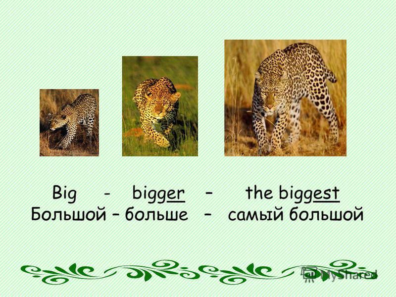 Big - bigger – the biggest Большой – больше – самый большой