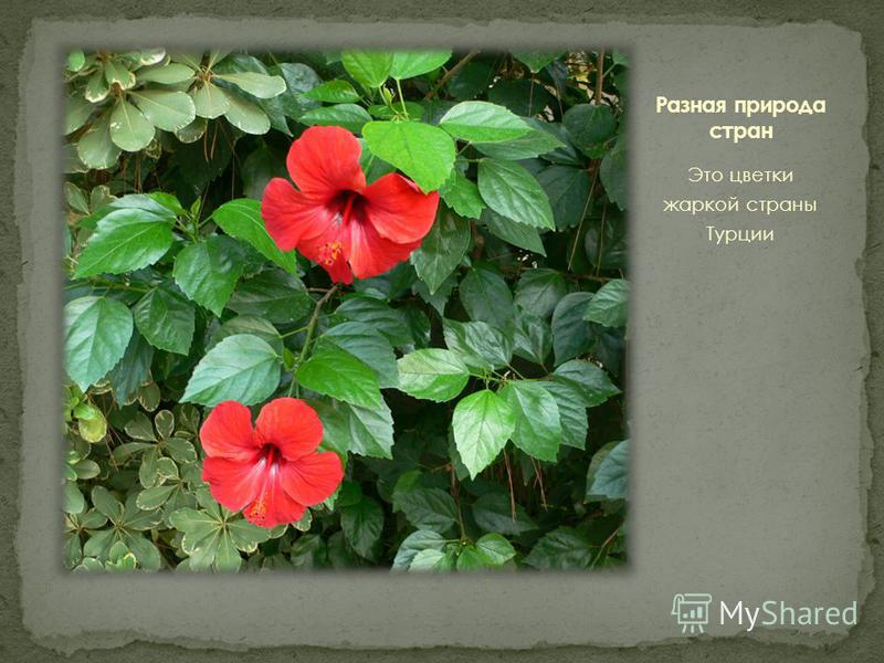 Это цветки жаркой страны Турции