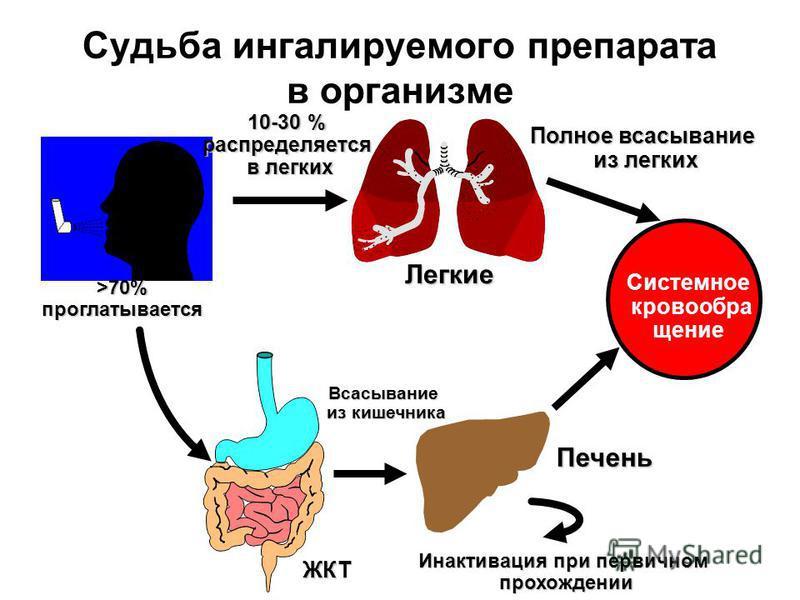 >70% проглатывается ЖКТ 10-30 % распределяется в легких в легких Легкие Полное всасывание из легких из легких Печень Всасывание из кишечника из кишечника Инактивация при первичном прохождении прохождении Системное кровообра щение Судьба ингалируемого