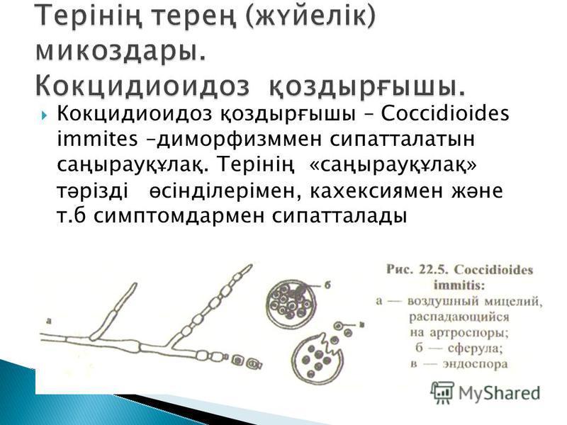 Кокцидиоидоз қоздырғышы – Соссіdioides immites –диморфизммен сипатталатын саңырауқұлақ. Терінің «саңырауқұлақ» т ә різді ө сінділерімен, кахексия мен ж ә не т.б симптомдармен сипатталлоды