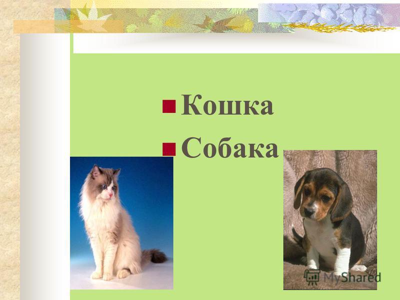 Кошка Собака Курица