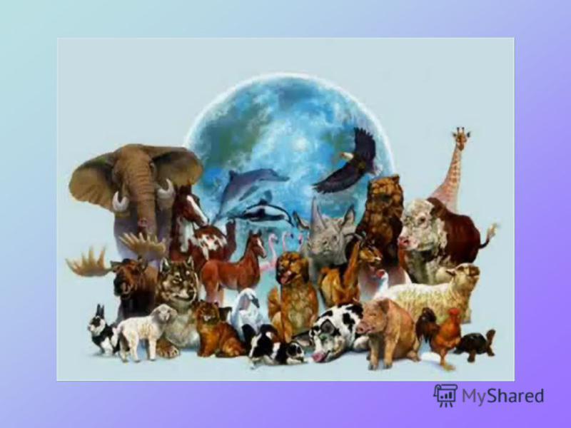 УСНИЙ РАХУНОК 3 КЛАС В світі тварин Тварини, які живуть у природі, самі добувають собі їжу, лаштують житло, виводять потомство, - називаються дикими. Тварини, яких розводять люди і використовують у господарстві, - називаються домашніми. За способом х
