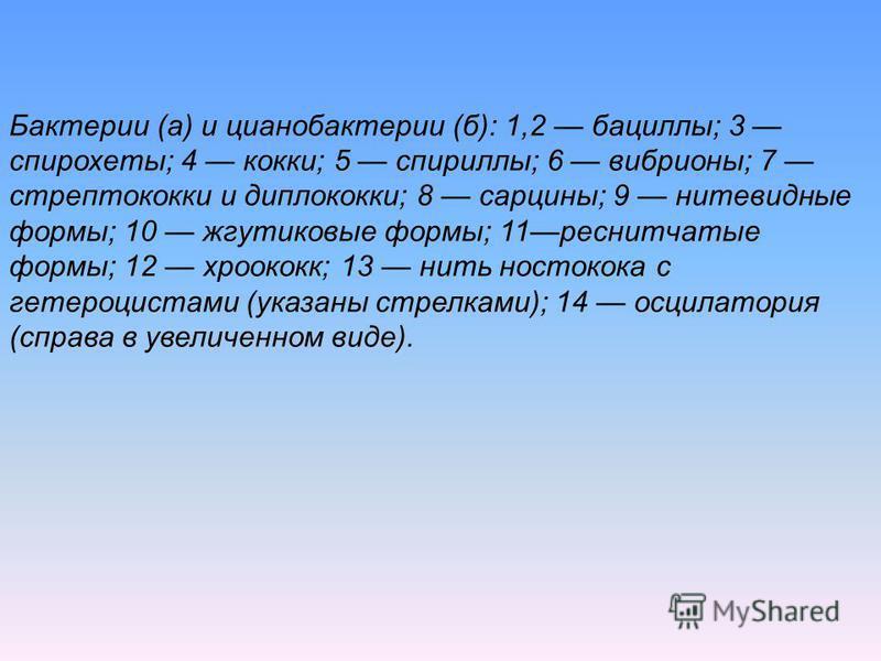 Бактерии (а) и цианобактерии (б): 1,2 бациллы; 3 спирохеты; 4 кокки; 5 спириллы; 6 вибрионы; 7 стрептококки и диплококки; 8 сарцины; 9 нитевидные формы; 10 жгутиковые формы; 11 реснитчатые формы; 12 хроококк; 13 нить ностокока с гетероцистами (указан