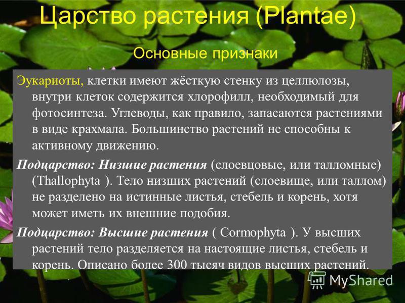Царство растения (Plantae) Эукариоты, клетки имеют жёсткую стенку из целлюлозы, внутри клеток содержится хлорофилл, необходимый для фотосинтеза. Углеводы, как правило, запасаются растениями в виде крахмала. Большинство растений не способны к активном