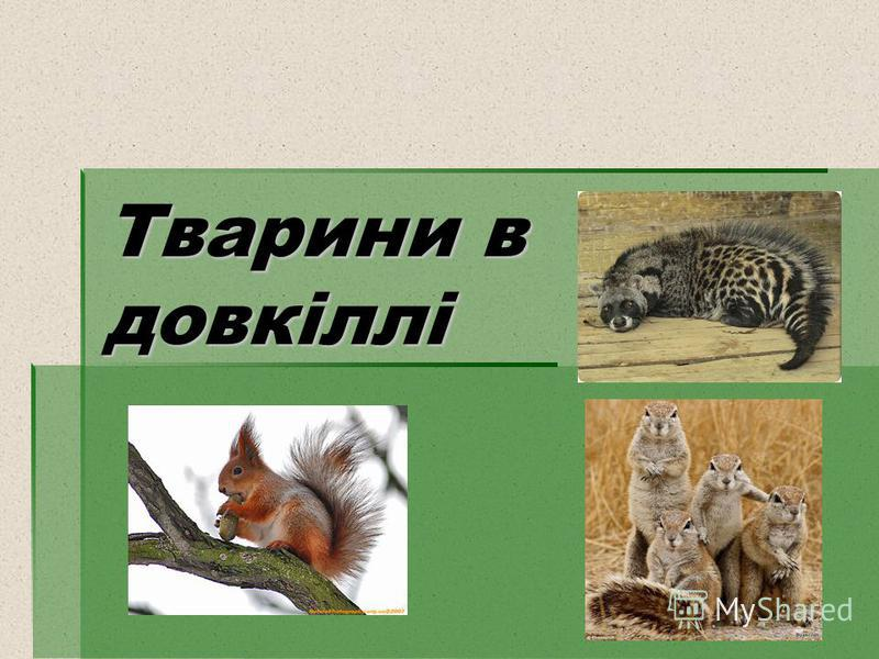 Тварини в довкіллі