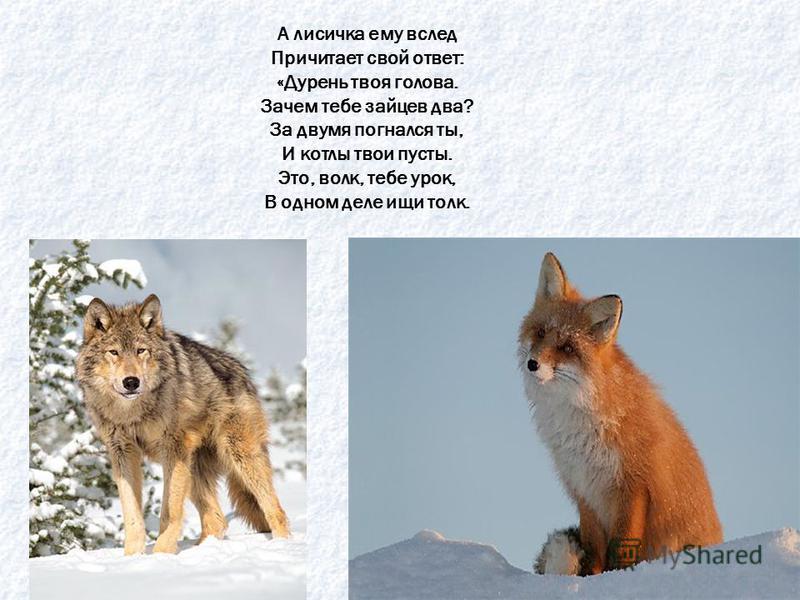Голодный волк пришел домой, И прогнал лису долой.