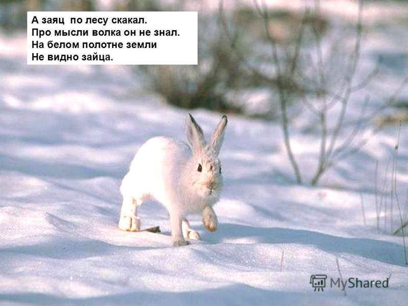Волк задумался немного. На лису посмотрел строго. Согласился, видно, злой, Снился на ходу косой.