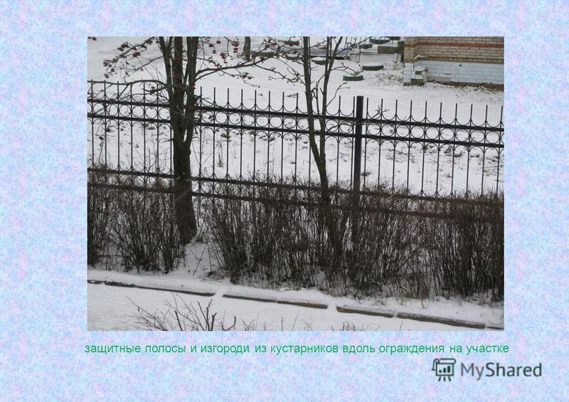 защитные полосы и изгороди из кустарников вдоль ограждения на участке