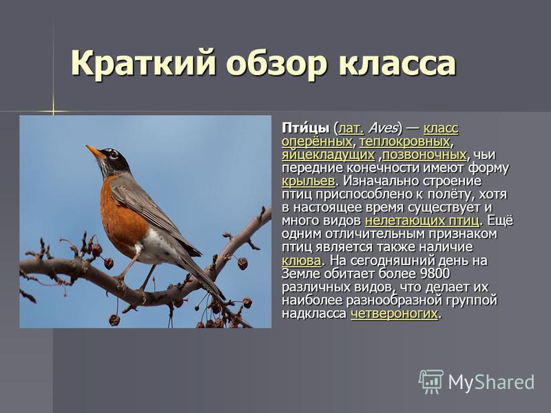 Краткий обзор класса Пти́цы (лат. Aves) класс оперённых, теплокровных, яйцекладущих,позвоночных, чьи передние конечности имеют форму крыльев. Изначально строение птиц приспособлено к полёту, хотя в настоящее время существует и много видов нелетающих