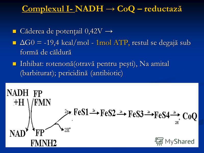 Complexul I- NADH CoQ – reductază Căderea de potenţail 0,42V Căderea de potenţail 0,42V ΔG0 = -19,4 kcal/mol - 1mol ATP, restul se degajă sub formă de căldură ΔG0 = -19,4 kcal/mol - 1mol ATP, restul se degajă sub formă de căldură Inhibat: rotenonă(ot