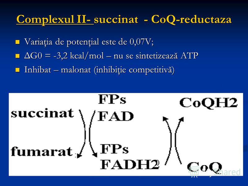Complexul II- succinat - CoQ-reductaza Variaţia de potenţial este de 0,07V; Variaţia de potenţial este de 0,07V; ΔG0 = -3,2 kcal/mol – nu se sintetizează ATP ΔG0 = -3,2 kcal/mol – nu se sintetizează ATP Inhibat – malonat (inhibiţie competitivă) Inhib
