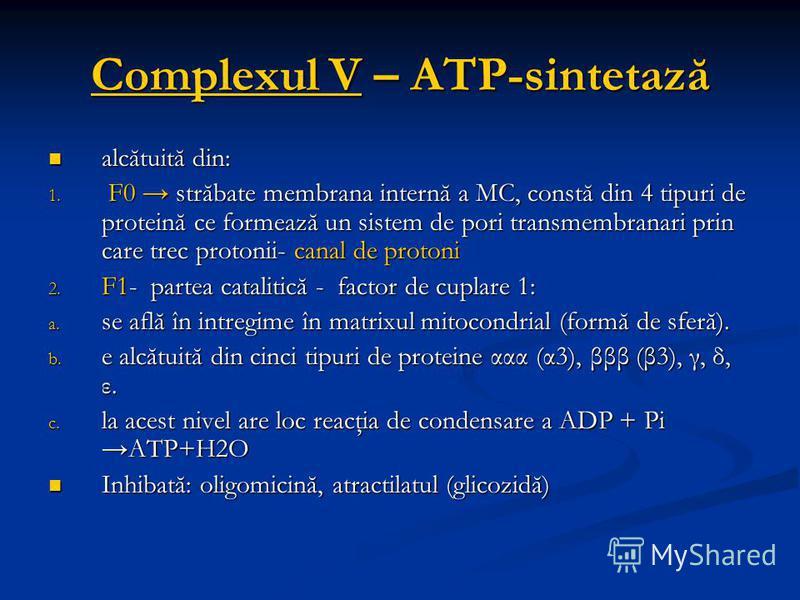 Complexul V – ATP-sintetază alcătuită din: alcătuită din: 1. F0 străbate membrana internă a MC, constă din 4 tipuri de proteină ce formează un sistem de pori transmembranari prin care trec protonii- canal de protoni 2. F1- partea catalitică - factor