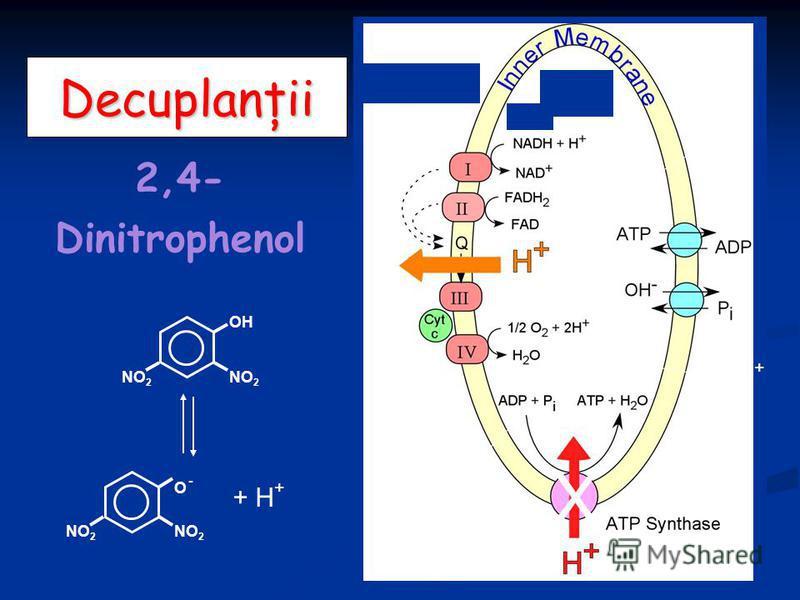 Decuplanţii 2,4- Dinitrophenol H+H+ H+H+ H+H+ X + H + NO 2 O -O - OH