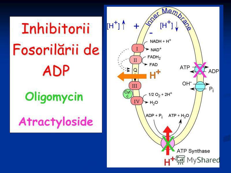 Inhibitorii Fosorilării de ADP X Oligomycin Atractyloside X