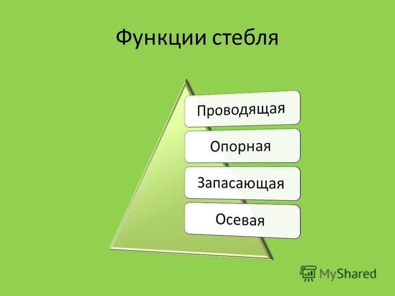 Функции стебля