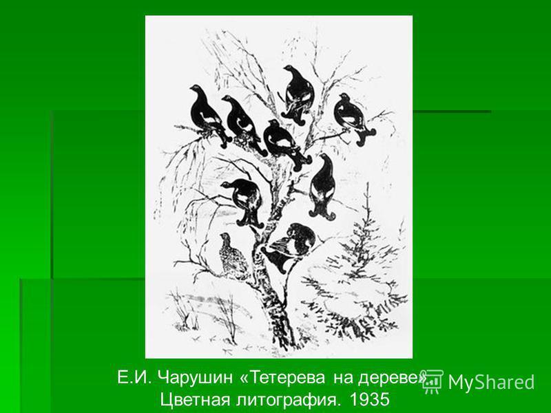 Е.И. Чарушин «Тетерева на дереве». Цветная литография. 1935