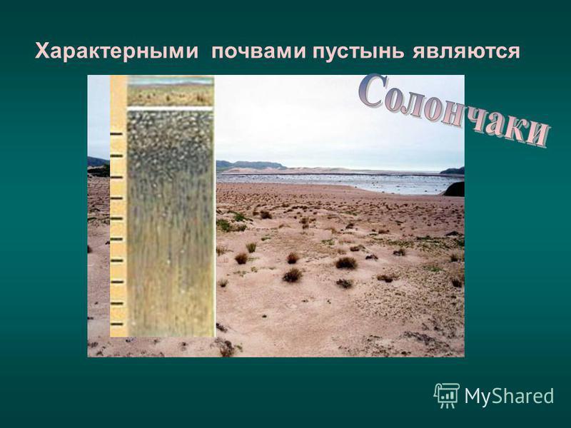Характерными почвами пустынь являются