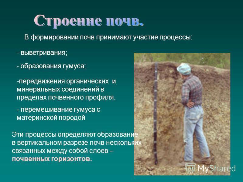 В формировании почв принимают участие процессы: - выветривания; - образования гумуса; -передвижения органических и минеральных соединений в пределах почвенного профиля. - перемешивание гумуса с материнской породой Эти процессы определяют образование