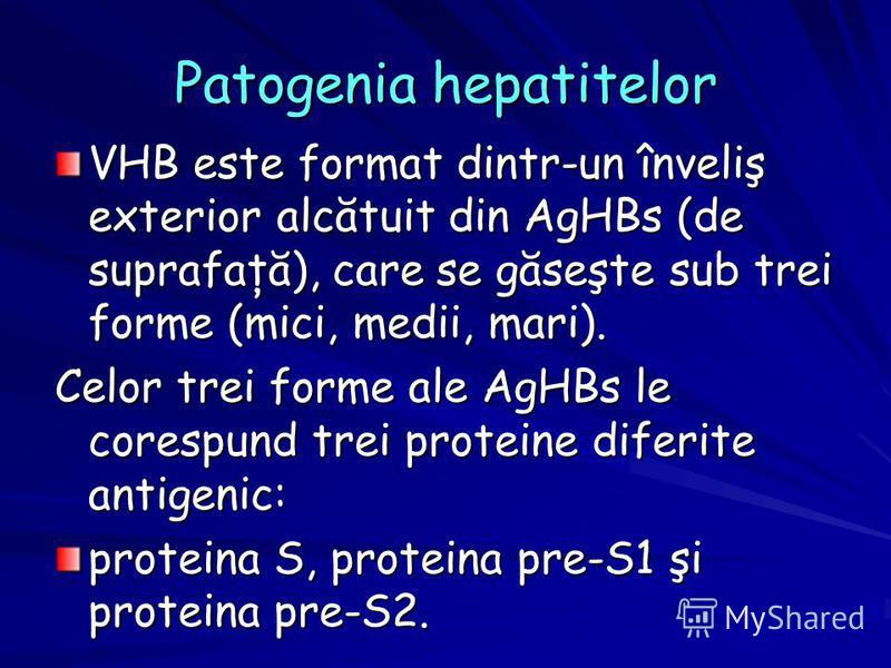 Patogenia hepatitelor VHB este format dintr-un înveliş exterior alcătuit din AgHBs (de suprafaţă), care se găseşte sub trei forme (mici, medii, mari). Celor trei forme ale AgHBs le corespund trei proteine diferite antigenic: proteina S, proteina pre-