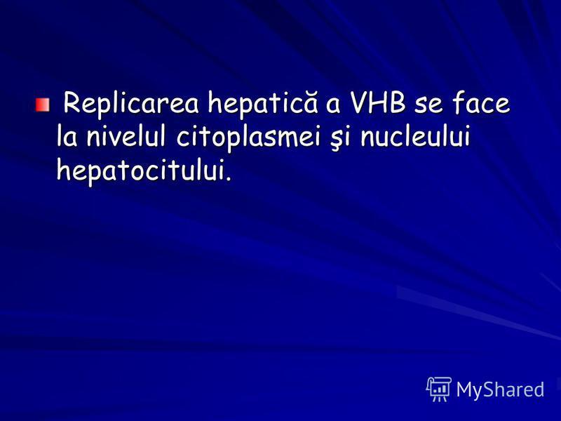 Replicarea hepatică a VHB se face la nivelul citoplasmei şi nucleului hepatocitului. Replicarea hepatică a VHB se face la nivelul citoplasmei şi nucleului hepatocitului.