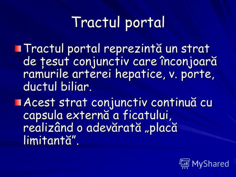 Tractul portal Tractul portal reprezintă un strat de ţesut conjunctiv care înconjoară ramurile arterei hepatice, v. porte, ductul biliar. Acest strat conjunctiv continuă cu capsula externă a ficatului, realizând o adevărată placă limitantă.