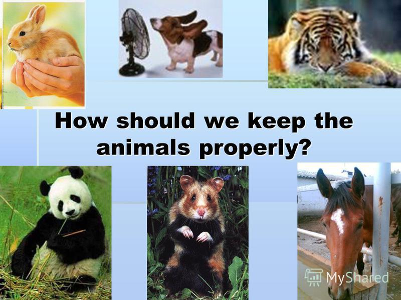 How should we keep the animals properly?