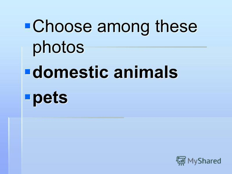 Choose among these photos Choose among these photos domestic animals domestic animals pets pets