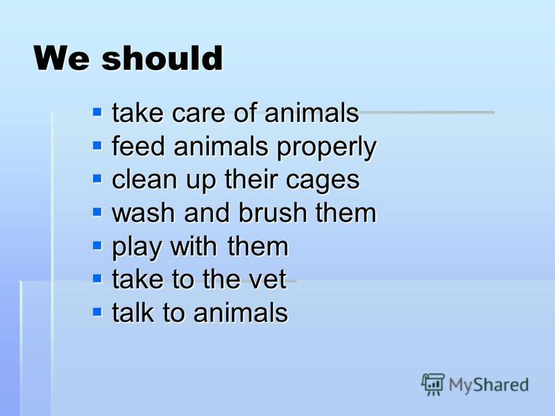 We should take care of animals take care of animals feed animals properly feed animals properly clean up their cages clean up their cages wash and brush them wash and brush them play with them play with them take to the vet take to the vet talk to an