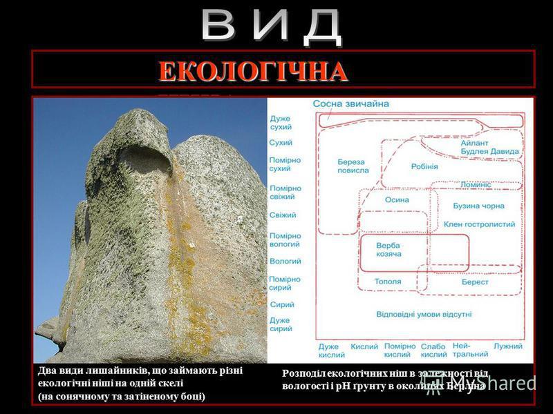 Екологічна характеристика виду Екологічна характеристика виду – сукупність екологічних ніш, які займають різні популяції певного в різних біогеоценозах: Екологічна нішаЕкологічна ніша – це просторове і трофічне положення популяції певного виду в біог