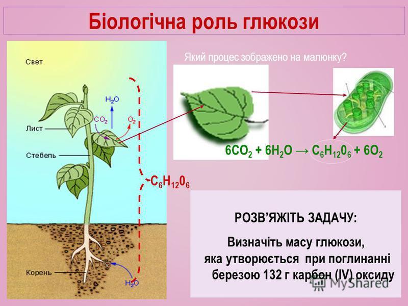 Біологічна роль глюкози Який процес зображено на малюнку? 6СО 2 + 6Н 2 О C 6 H 12 0 6 + 6О 2 C 6 H 12 0 6 Як ви гадаєте, яке значення глюкози для одного дерева? Як ви гадаєте, яке значення фотосинтезу для міста? Як ви гадаєте, яке значення фотосинтез
