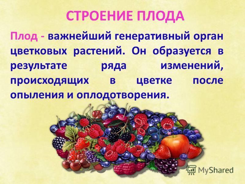 Плод - важнейший генеративный орган цветковых растений. Он образуется в результате ряда изменений, происходящих в цветке после опыления и оплодотворения. СТРОЕНИЕ ПЛОДА