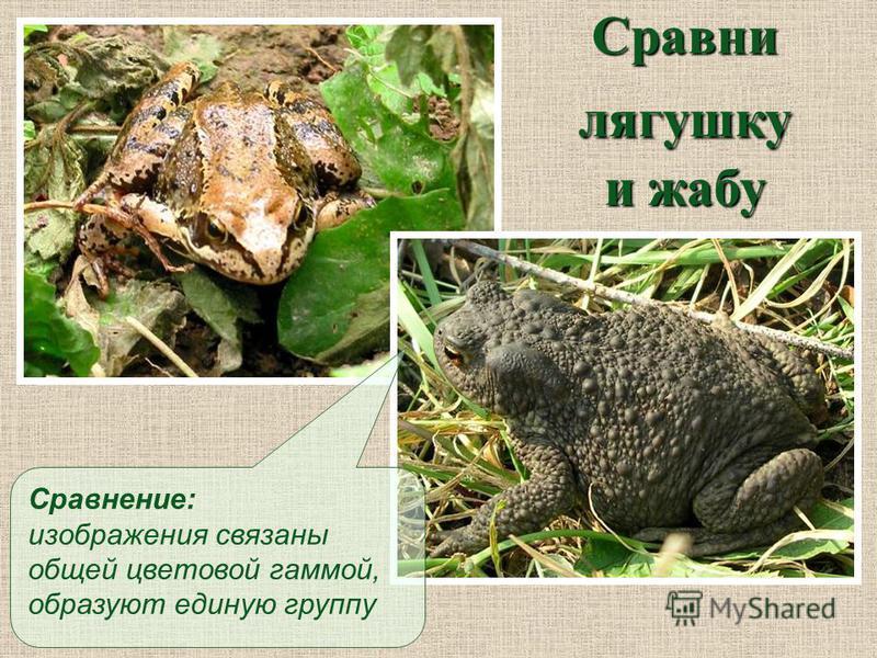 Сравни лягушку и жабу Сравнение: изображения связаны общей цветовой гаммой, образуют единую группу