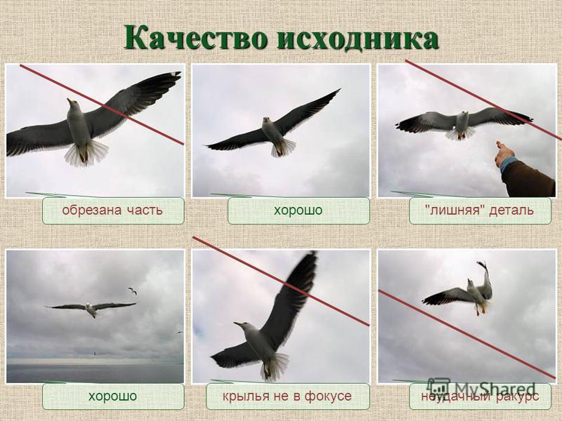 Качество исходника обрезана частьлишняя деталь неудачный ракурс крылья не в фокусе хорошо