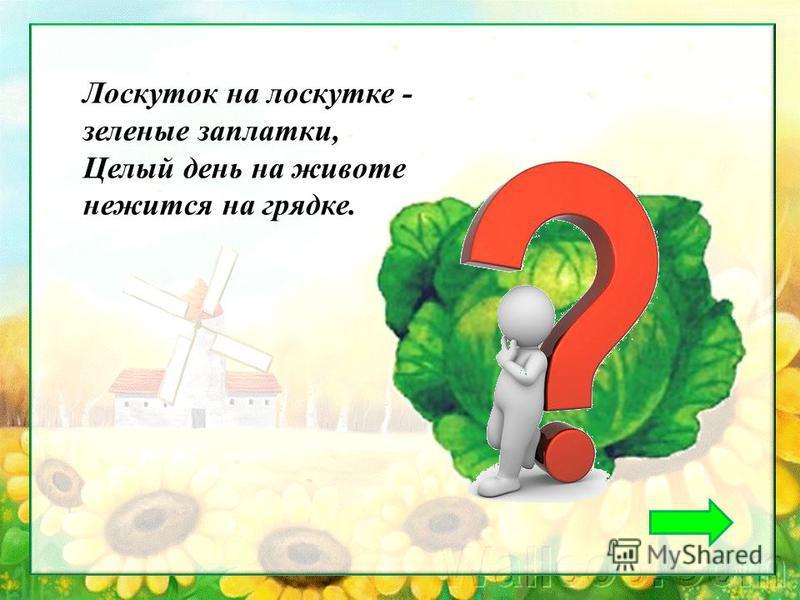Лоскуток на лоскутке - зеленые заплатки, Целый день на животе нежится на грядке.