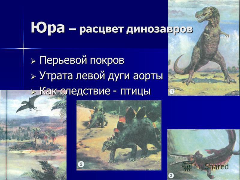 Юра – расцвет динозавров Перьевой покров Перьевой покров Утрата левой дуги аорты Утрата левой дуги аорты Как следствие - птицы Как следствие - птицы