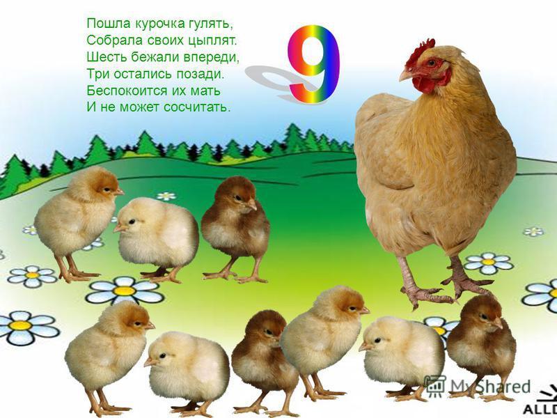 Пошла курочка гулять, Собрала своих цыплят. Шесть бежали впереди, Три остались позади. Беспокоится их мать И не может сосчитать.