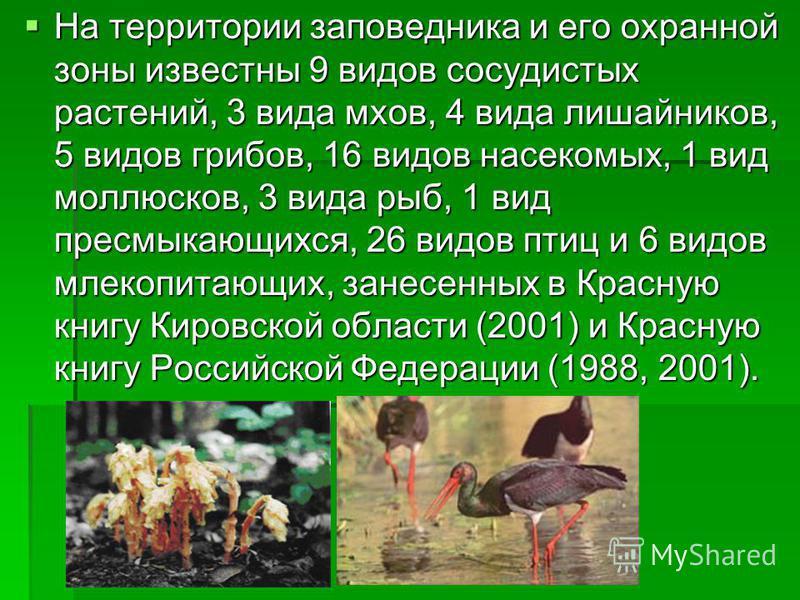 На территории заповедника и его охранной зоны известны 9 видов сосудистых растений, 3 вида мхов, 4 вида лишайников, 5 видов грибов, 16 видов насекомых, 1 вид моллюсков, 3 вида рыб, 1 вид пресмыкающихся, 26 видов птиц и 6 видов млекопитающих, занесенн