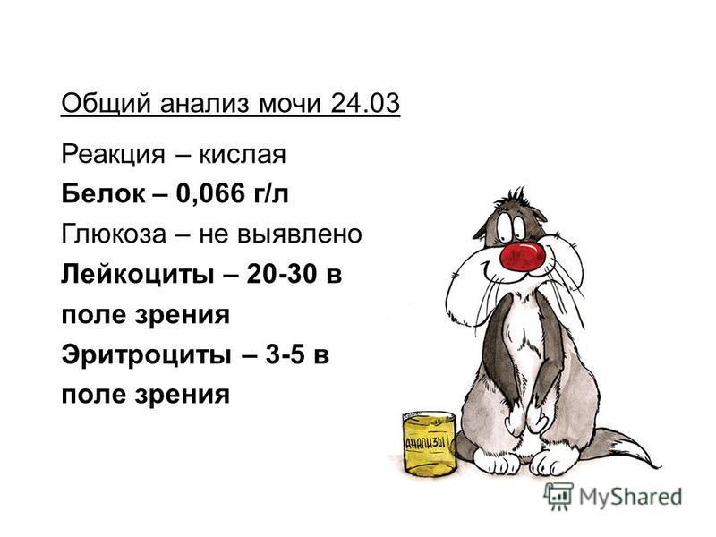 Общий анализ мочи 24.03 Реакция – кислая Белок – 0,066 г/л Глюкоза – не выявлено Лейкоциты – 20-30 в поле зрения Эритроциты – 3-5 в поле зрения
