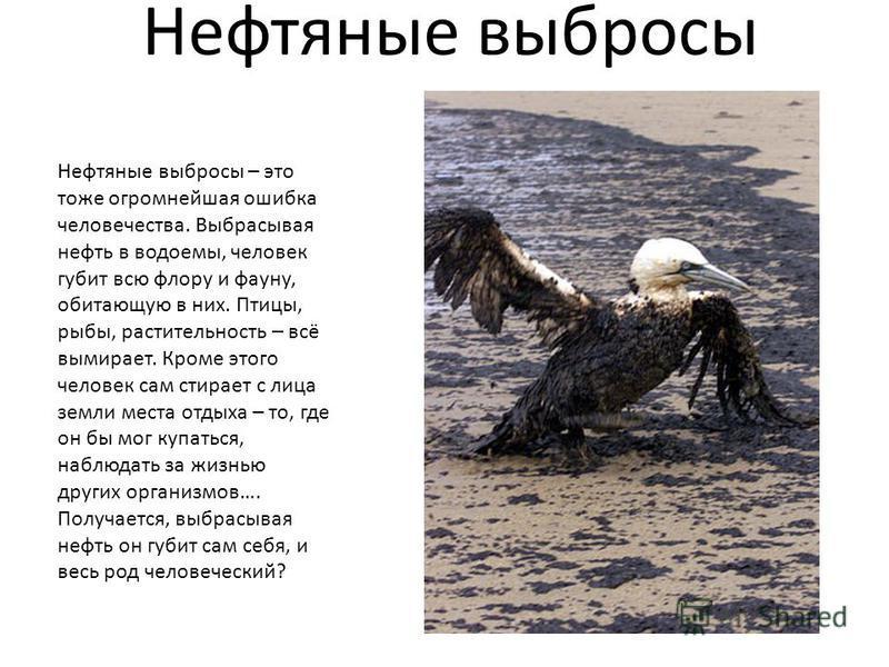 Нефтяные выбросы Нефтяные выбросы – это тоже огромнейшая ошибка человечества. Выбрасывая нефть в водоемы, человек губит всю флору и фауну, обитающую в них. Птицы, рыбы, растительность – всё вымирает. Кроме этого человек сам стирает с лица земли места